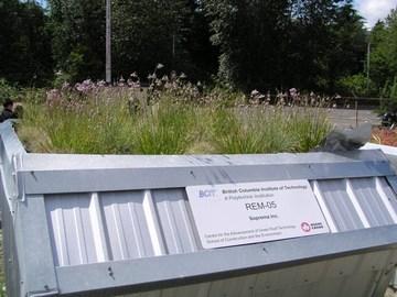 UBC gi tour - bcit green roof (june 2007)