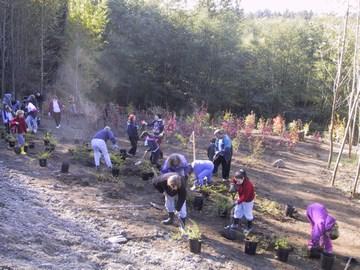 6Delta-tree planting