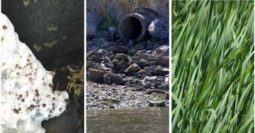 Reinventing rainwater management - pollution