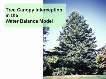 Tree canopy interception in the water balance model