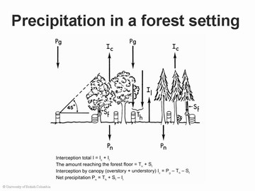 Precipitation in a forest setting