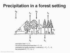 Tree canopy research project - precipitation in a forest setting