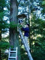 Gerald lohmann installing tree canopy station, clovelly-caulfeild, jan 2007 (240pixels)