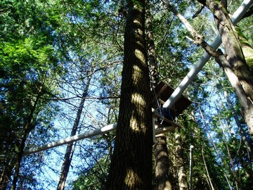 Tree canopy station on stiver property, west van, jan 2007